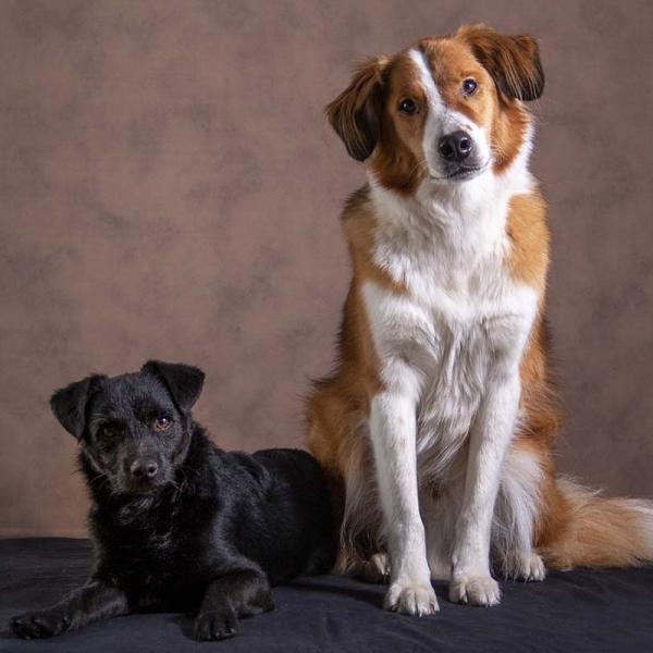 buitenlandse honden in de studio