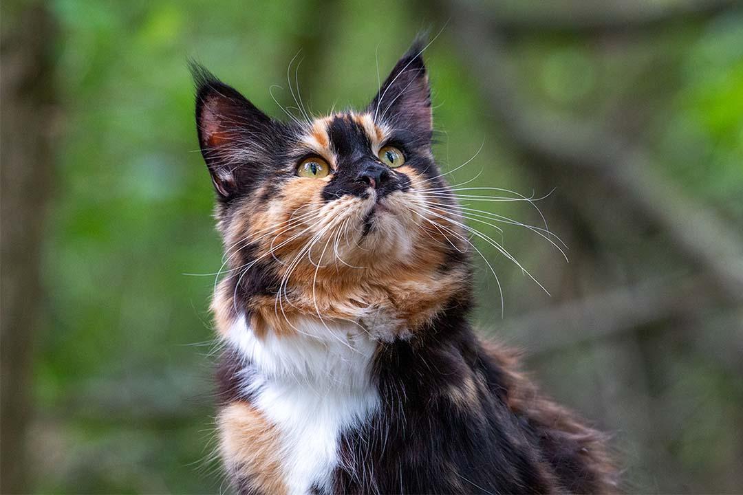 Kat in het bos