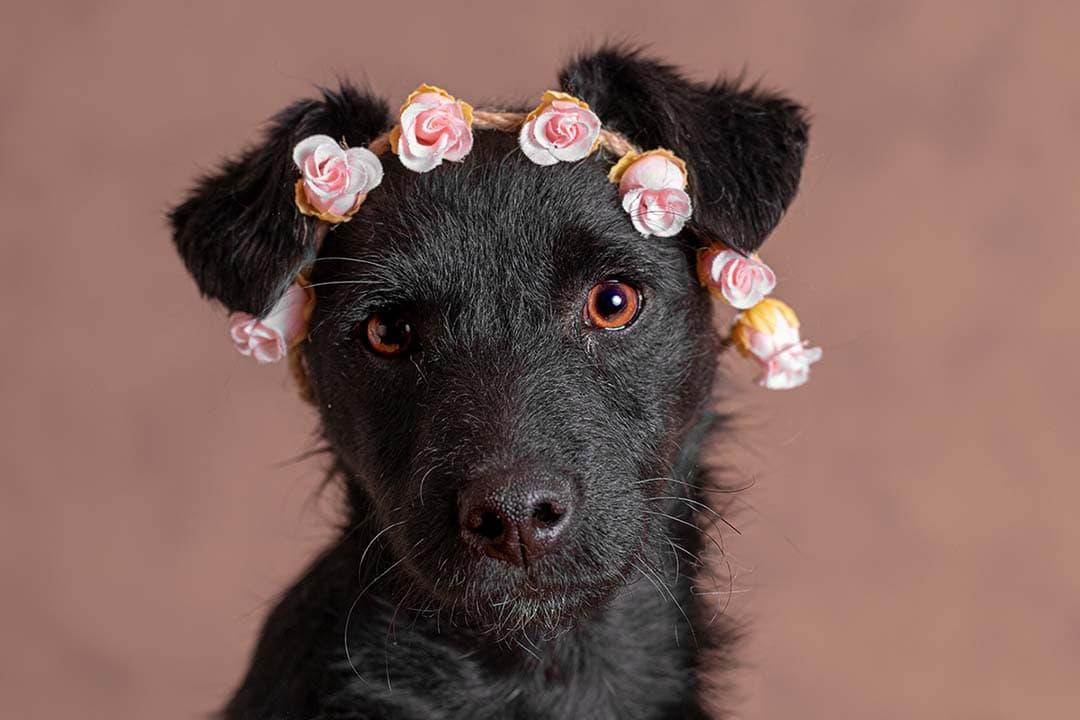 Sammy met rozen