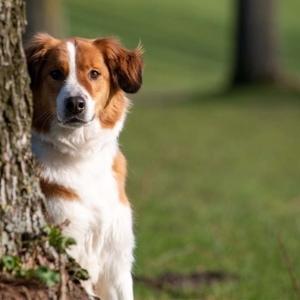 blog hond blijft zitten voor hondenfoto zitten