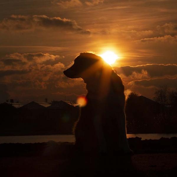 een oranje zonsondergang