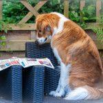Cooper leest de krant