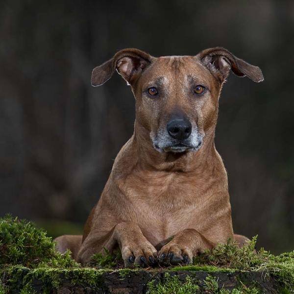 hond op het mos