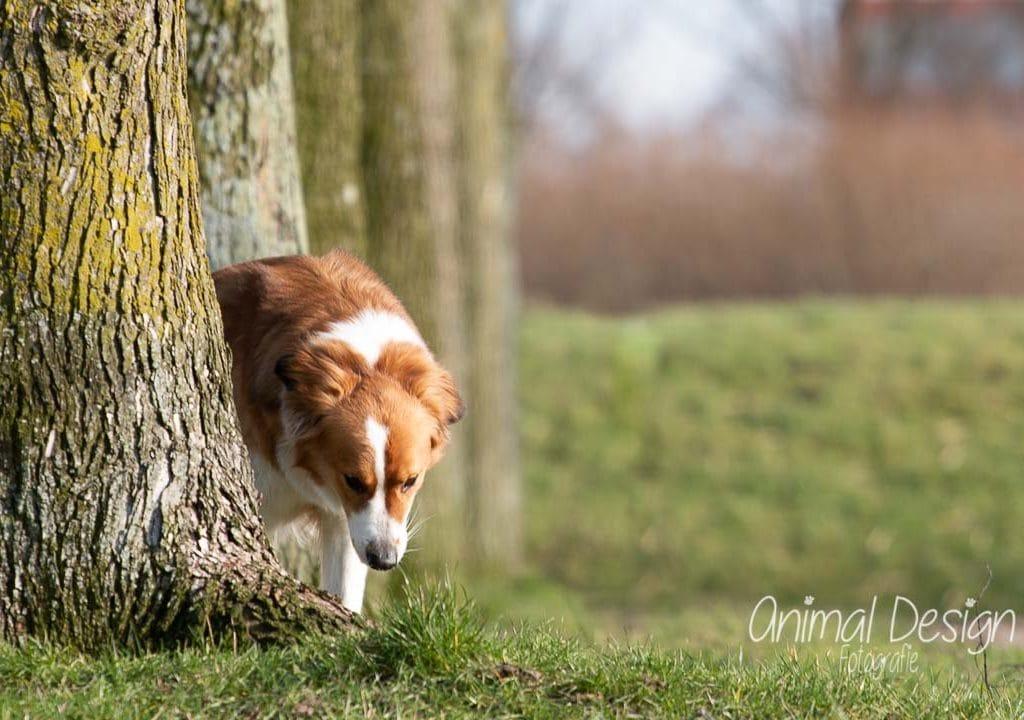 Hoe blijft jouw hond zitten? 4