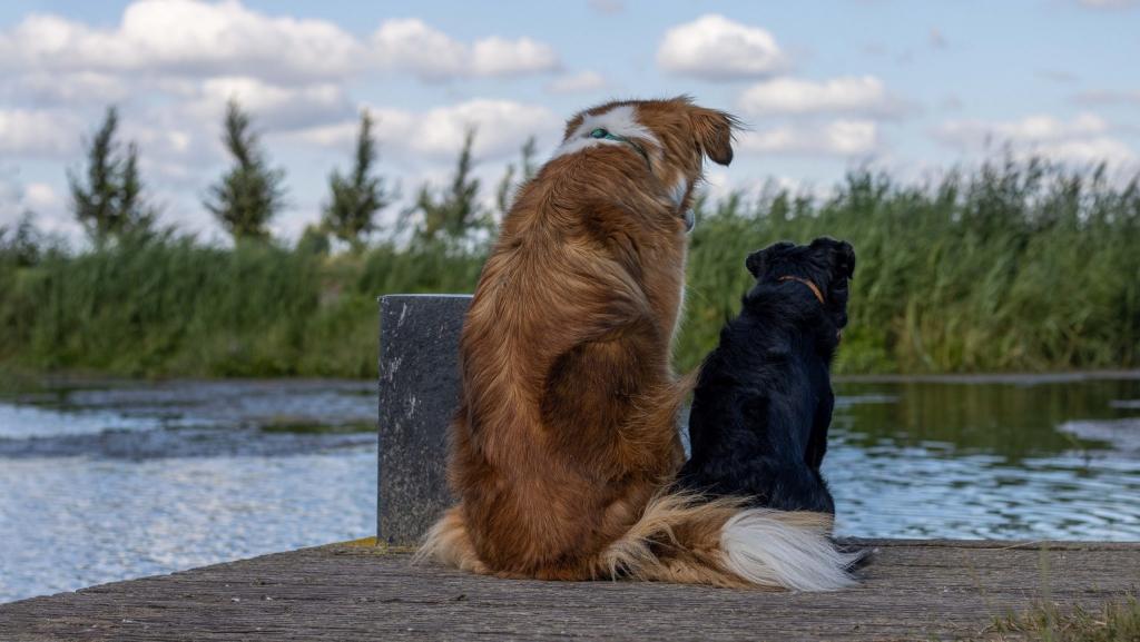 Hondenfoto en checklist
