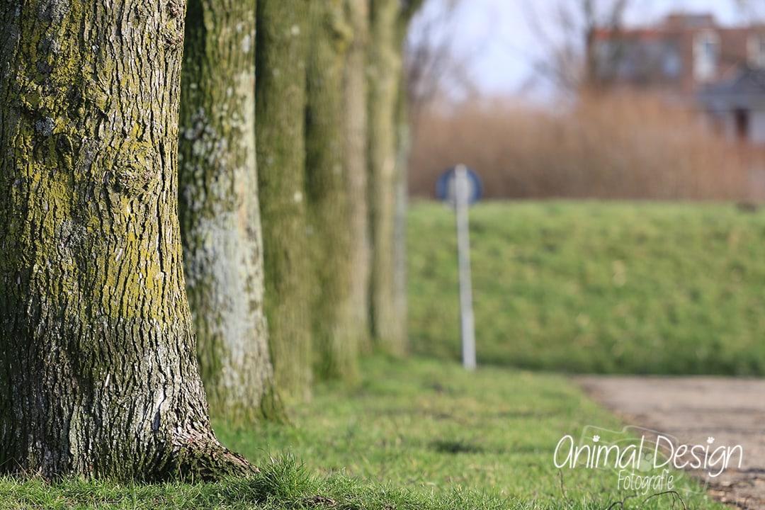 bomenrij en een verkeersbord