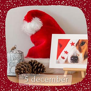 Animal Design Adventskalender december 2020 8