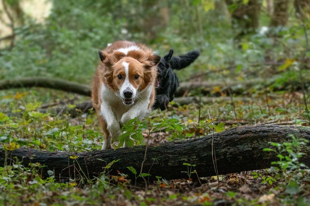 uitdollen in het bos