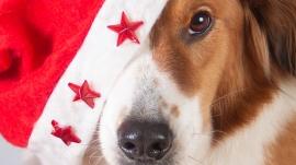 kerstkaart hondenhoofd met Kerstmuts