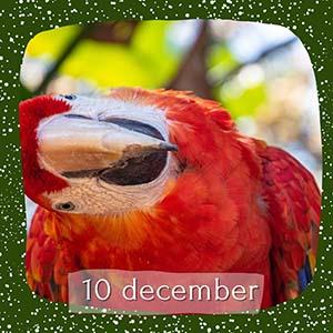 advent 10 december
