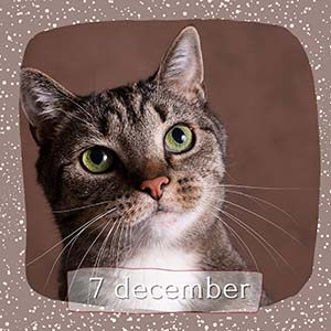 Advent 7 december