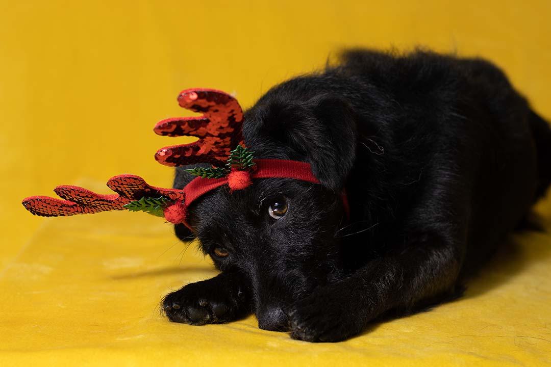 nagelbijtende hond