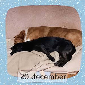 Animal Design Adventskalender december 2020 10
