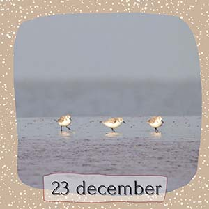 Animal Design Adventskalender december 2020 12