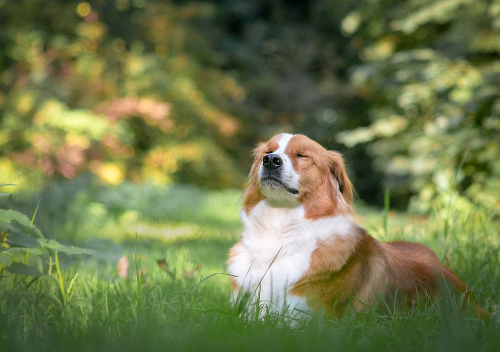 hond zonder riem in het gras