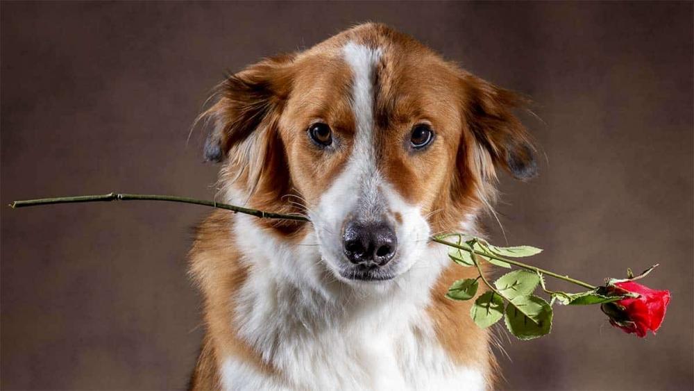 Valentijns foto