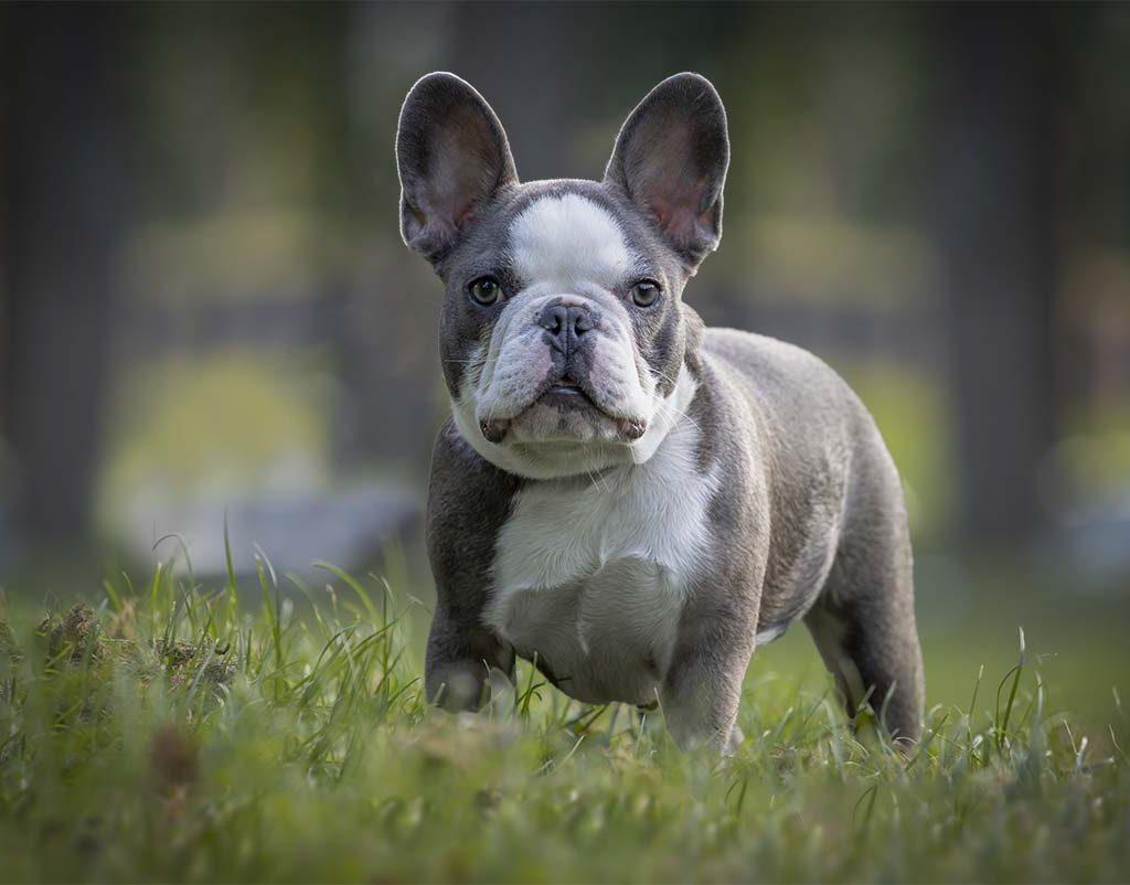 puppyfoto van Dexx