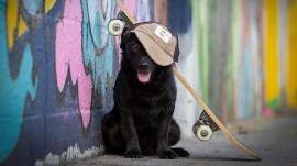Blog skateboard Sammy het verhaal achter deze hondenfoto