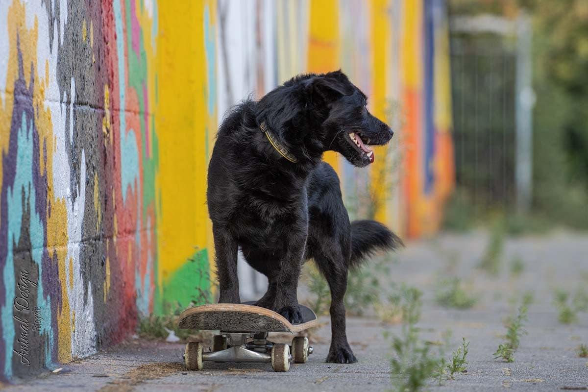 Een andere hond loopt voorbij
