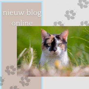 Blog aankondiging