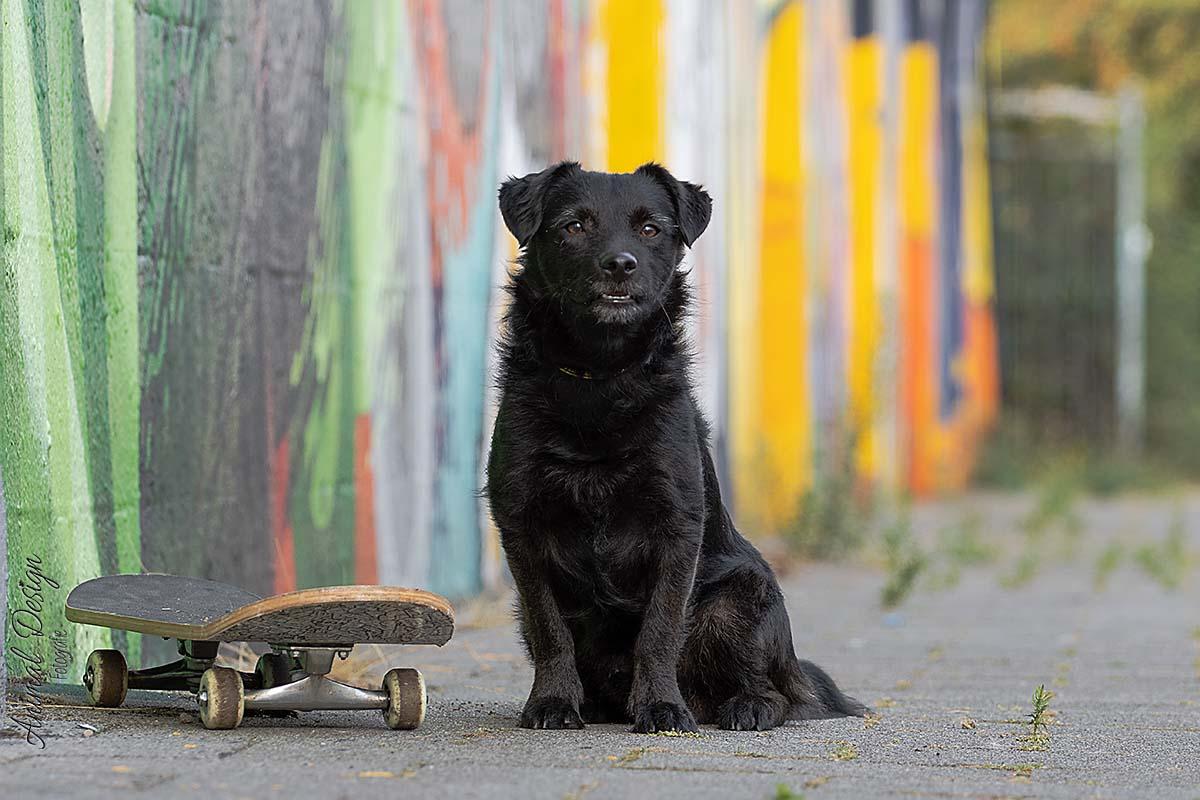 Ontspannen naast het skateboard