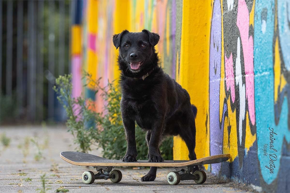 Stoere honden-bink op het skateboard