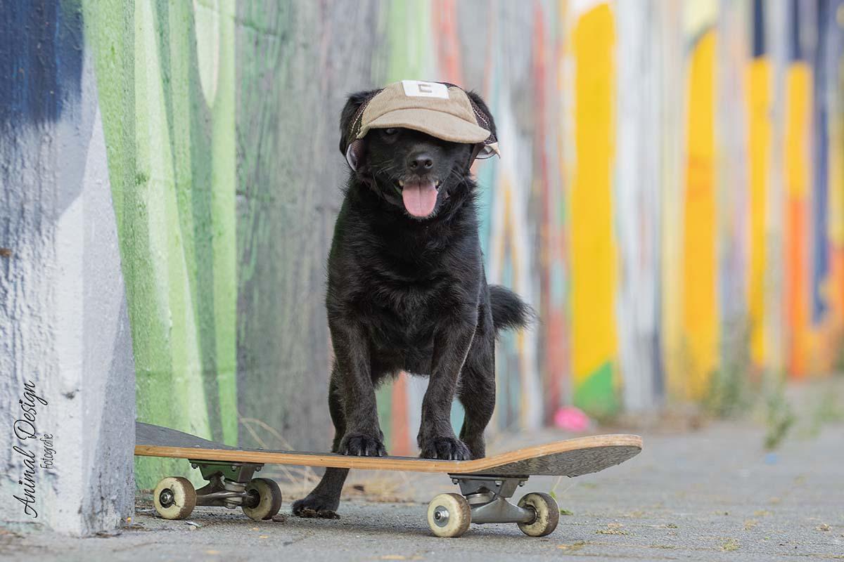Het verhaal achter deze hondenfoto, Skateboard Sammy. 2