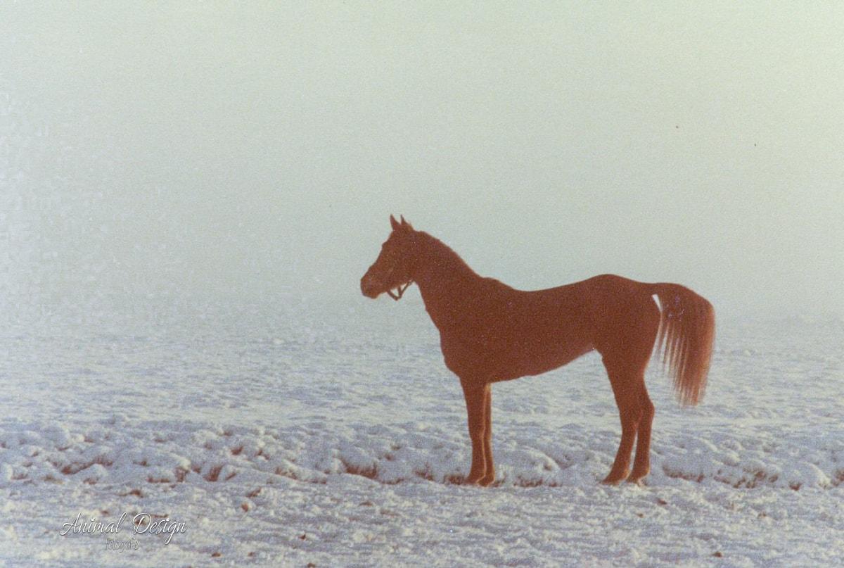 Terug in de tijd: Paard in de sneeuw - 1980/1981