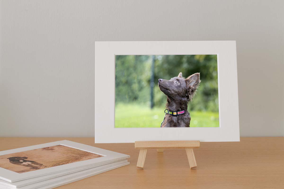 Fotokaart minisessie pups