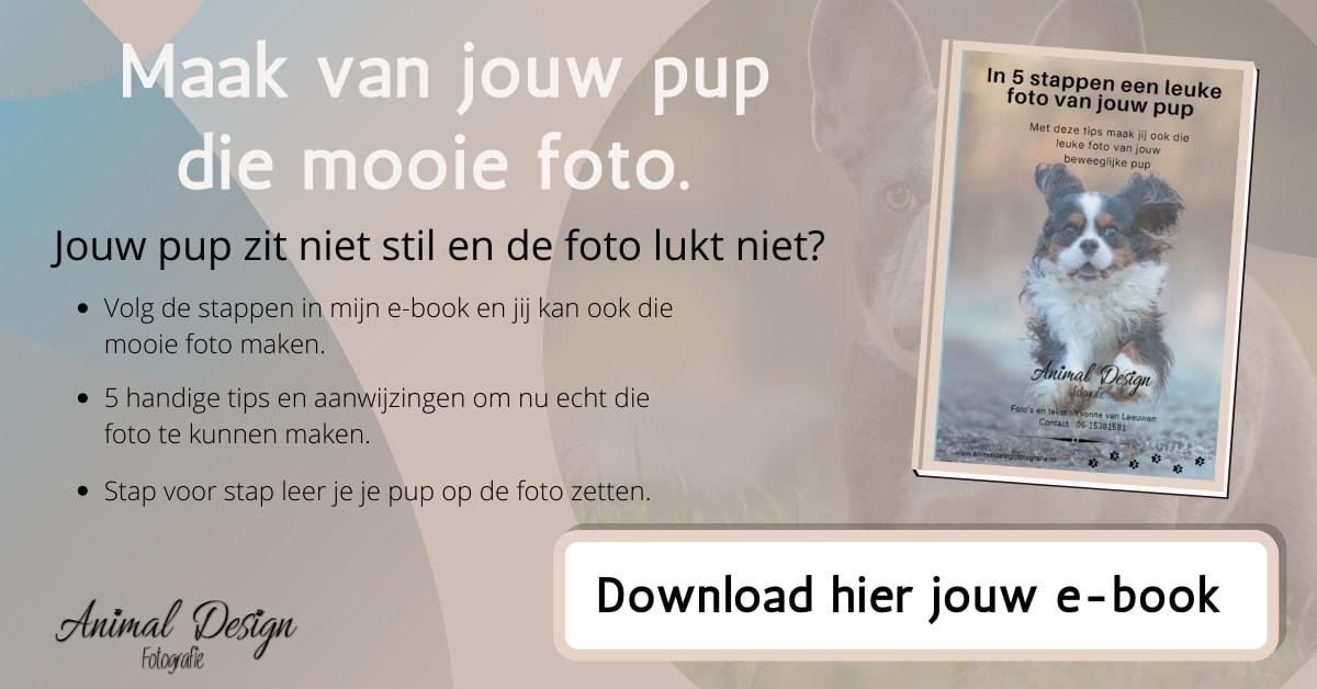 e-book pupfoto
