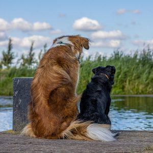 Hondenfoto op de stieger