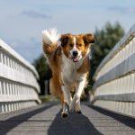 Foto rennen over de brug