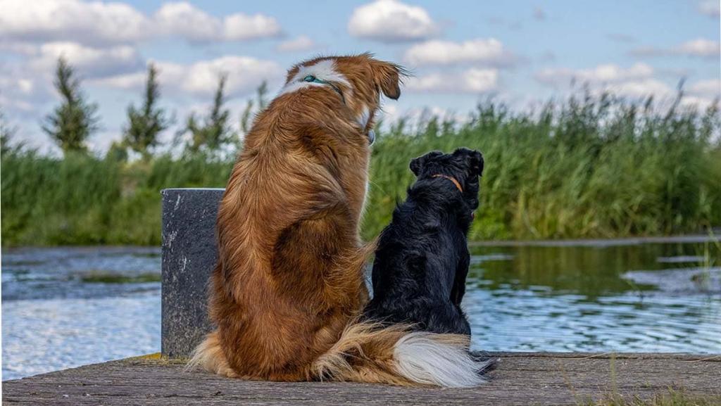 hondenfoto op de steiger