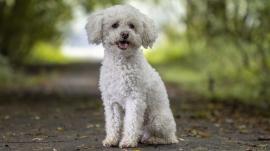 Een hond fotograferen bij weinig licht
