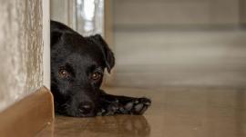 zwarte hond binnen fotograferen