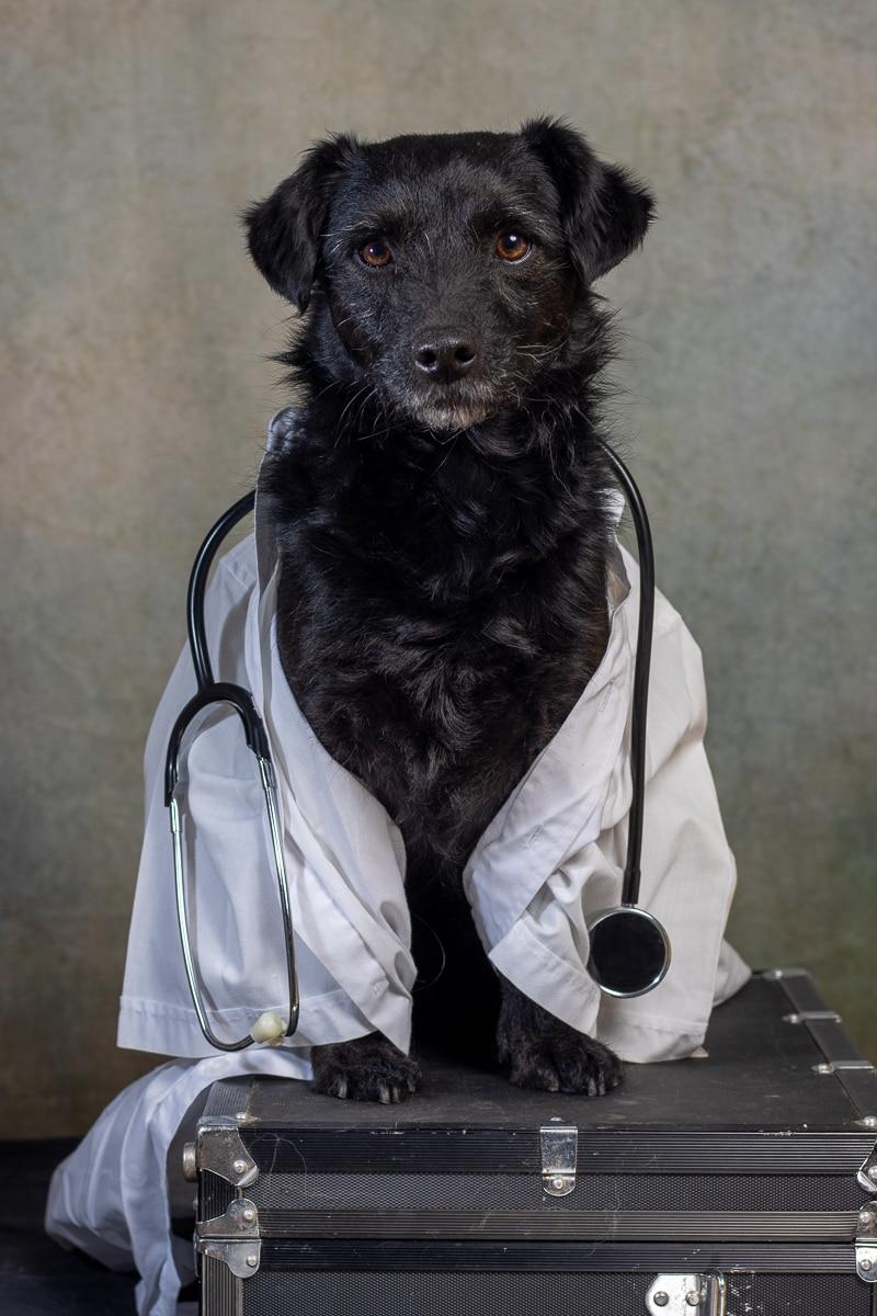 Hond-met-doktersjas