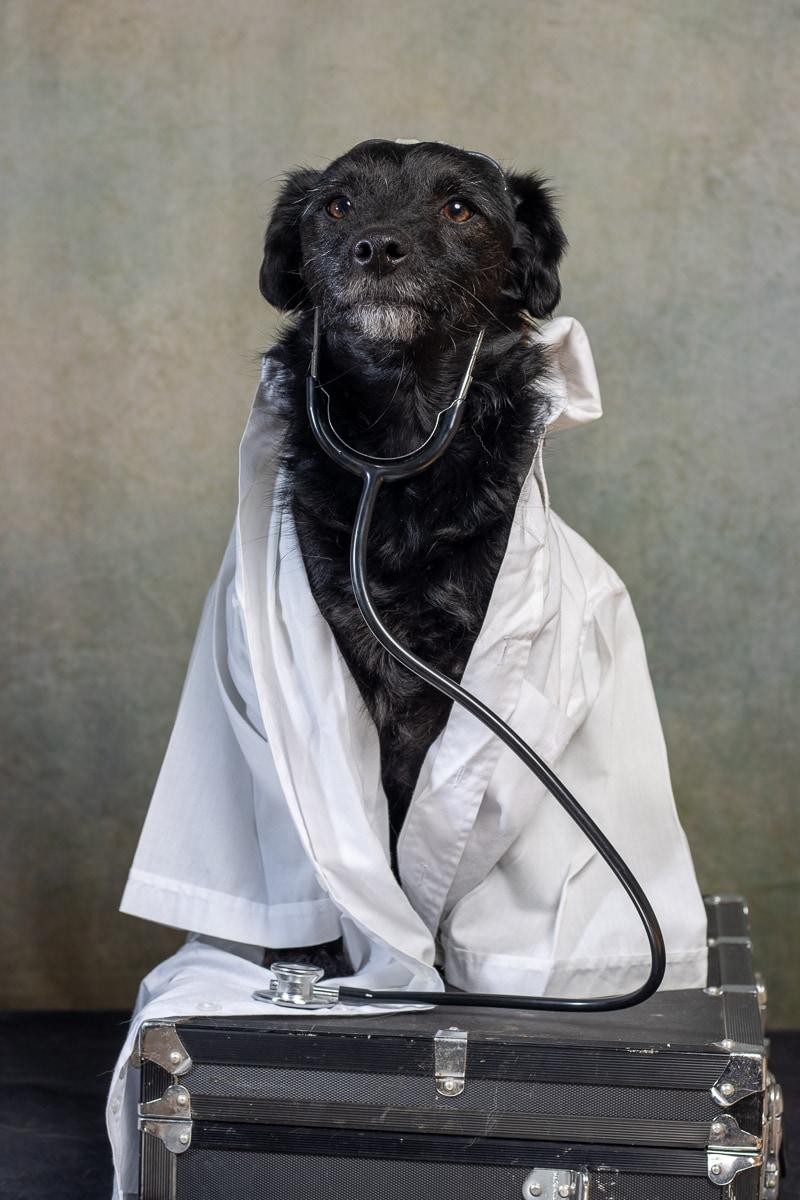 Hond-met-stethoscoop