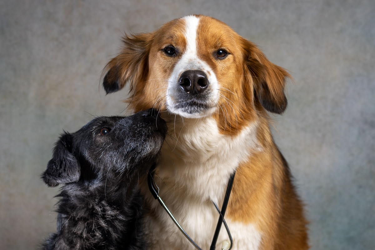 2 honden