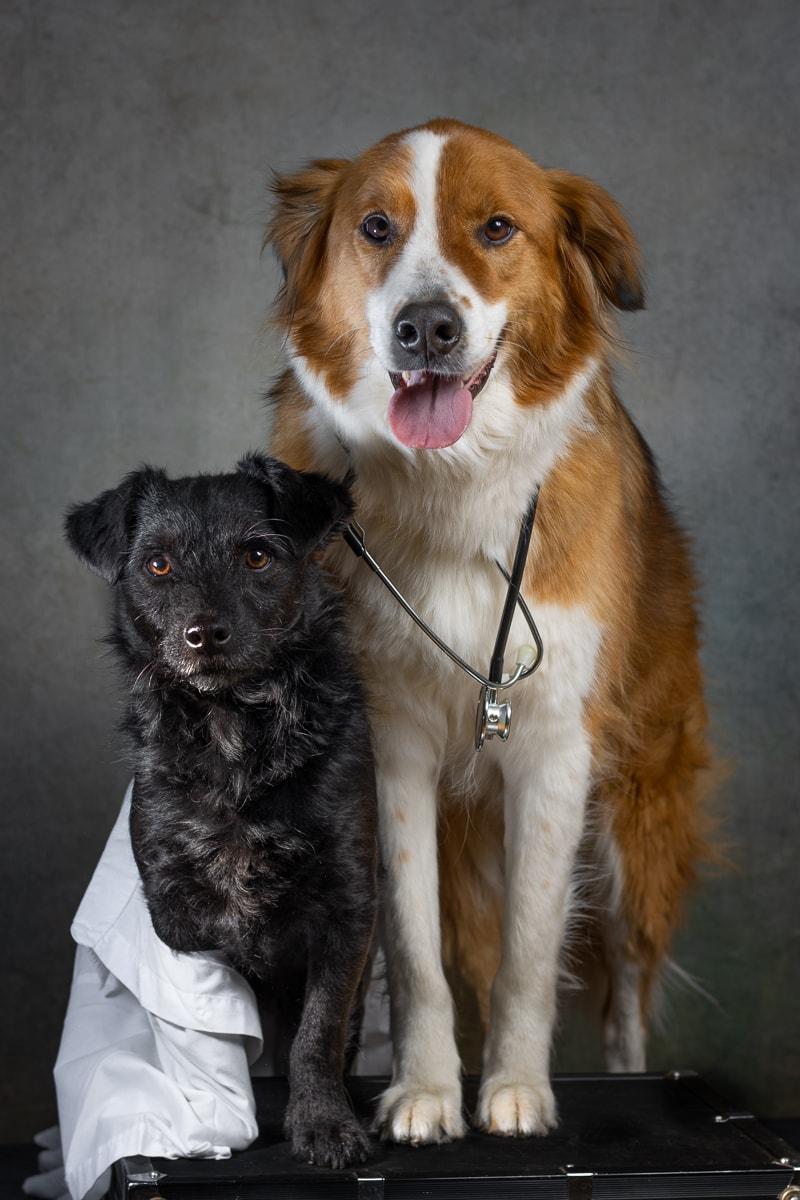 2-honden-als-dokter-op-de-foto