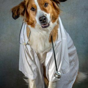 Hondenfoto-in-een-doktersjas