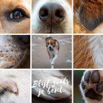 Foto's van je hond