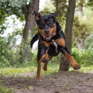 Bertus aan het rennen