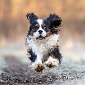 een hond rent in het bos
