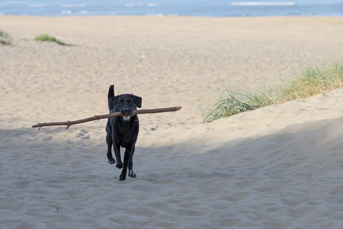 Actiefoto op het strand