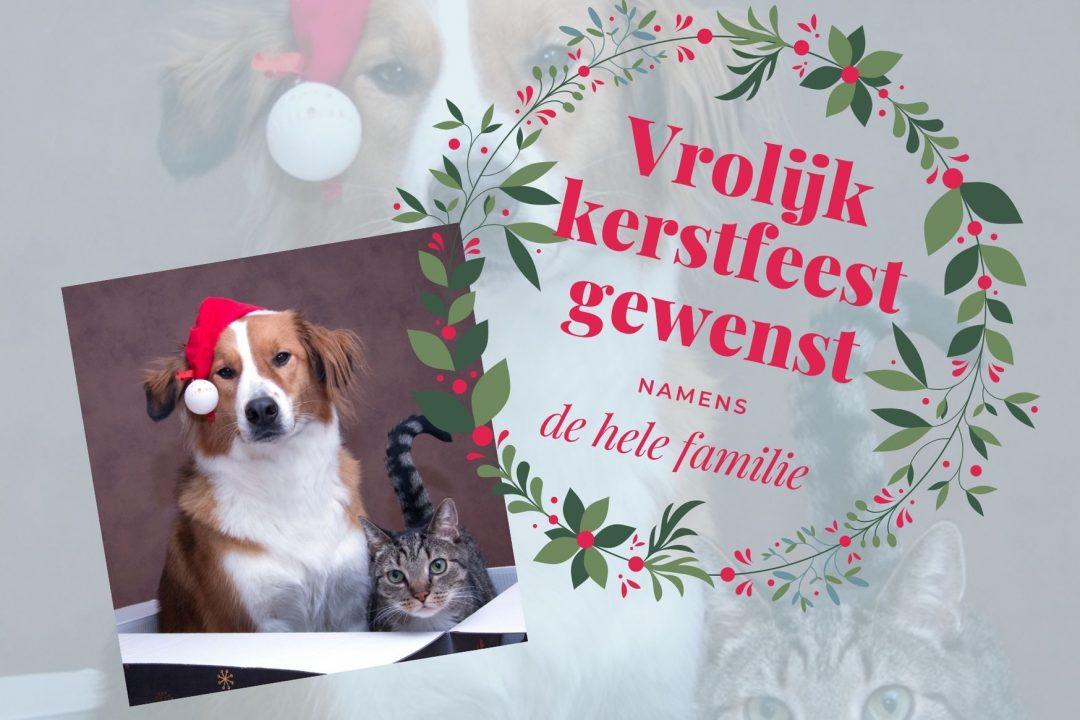 Vrolijk kerstfeest met hond en kat in een doos