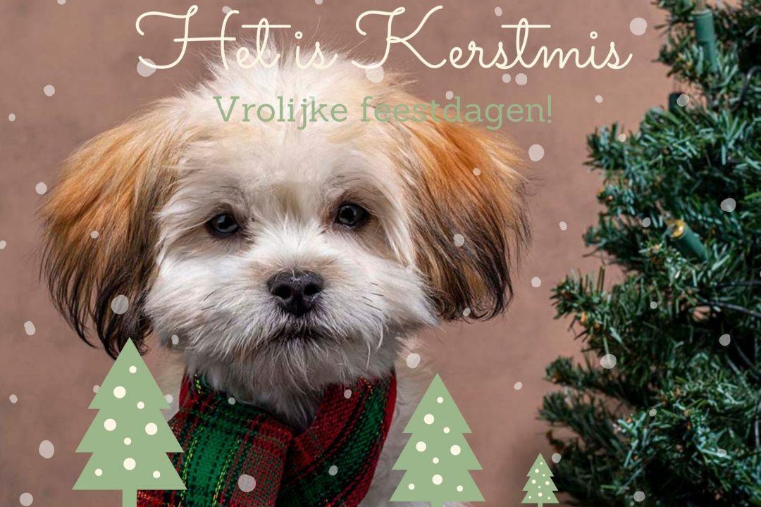 Foto kerstkaart met hond en kerstboom